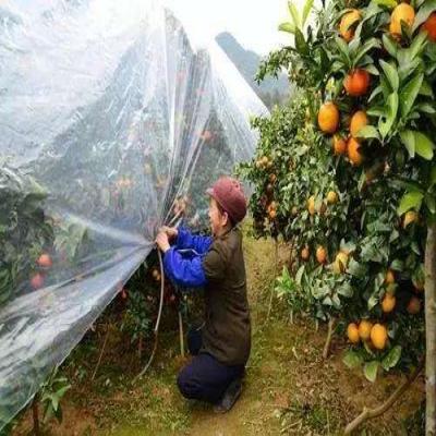 柑橘在寒冷季节怎么御寒抗冻