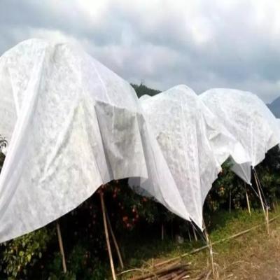 雨季使用柑橘防寒布须知