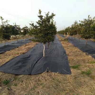为什么即使到了秋冬季节也要铺设防草布?